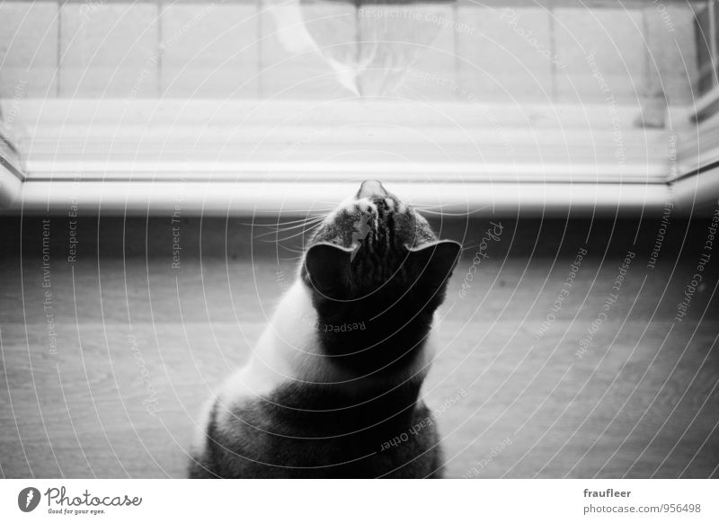 hangover Animal Pet Cat 1 Wood Glass Moody Watchfulness Curiosity Interest Longing Black & white photo Interior shot Close-up Deserted Copy Space top Day