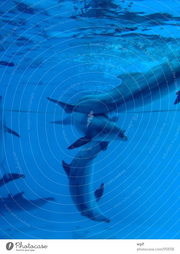 Water Ocean Blue Joy Life Lake Dance Aquarium Mammal Dolphin Whale