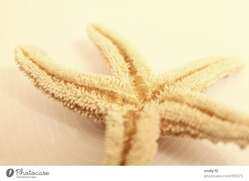 A star fell down Starfish Yellow Beach Ocean Summer 5 Underwater photo Salty Coast Finding Nemo Fish Star (Symbol) Water Sand Death Bright Universe