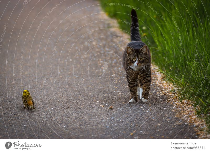 Bird and Cat Playing Animal Pet Wild animal Pelt Claw Paw 2 Running Catch Flying To feed Feeding Going Hunting Fight Smiling Wait Exceptional Threat
