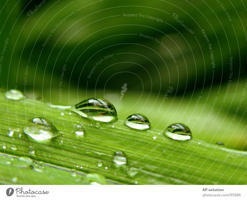 Nature Green Water Calm Rain Glittering Fresh Drops of water Electricity Wet 3 Rope Round Clarity Near Part
