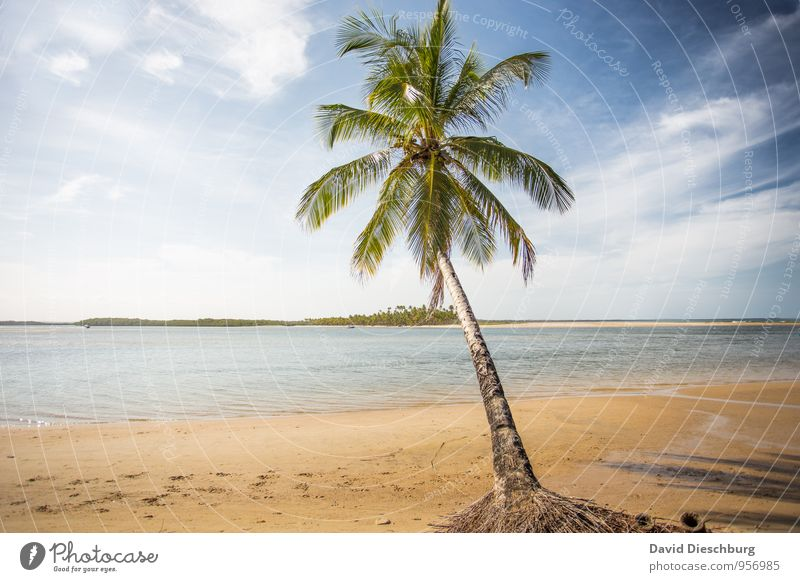 Sky Nature Vacation & Travel Blue Green White Water Summer Tree Relaxation Ocean Landscape Clouds Beach Yellow Coast