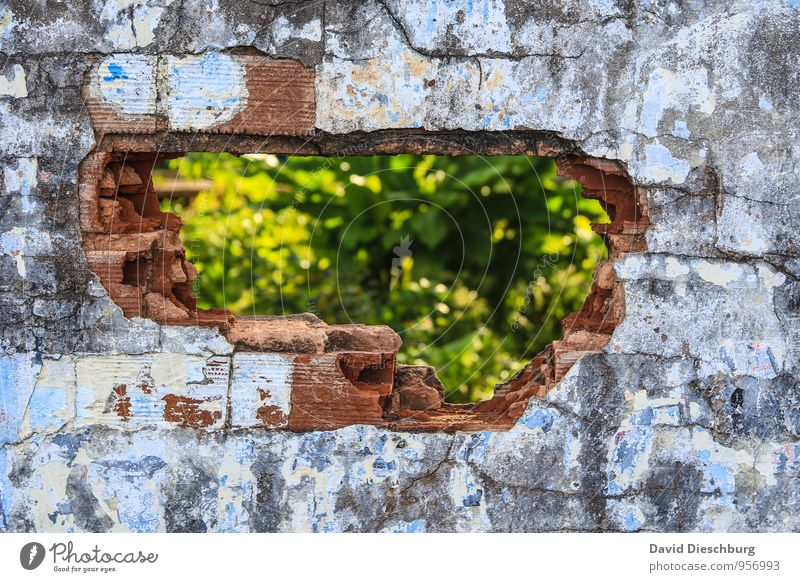 stopgaps Plant Wall (barrier) Wall (building) Facade Blue Yellow Green Black White Uniqueness Broken Hollow Structures and shapes Crack & Rip & Tear