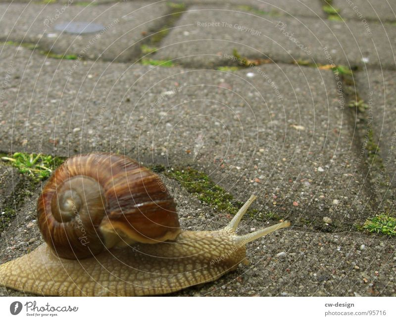 at a snail's pace up to 40! Snail Crawl Slowly Animal Vineyard snail Air-breathing land snail House (Residential Structure) Snail shell Inhabited Slimy Mucus