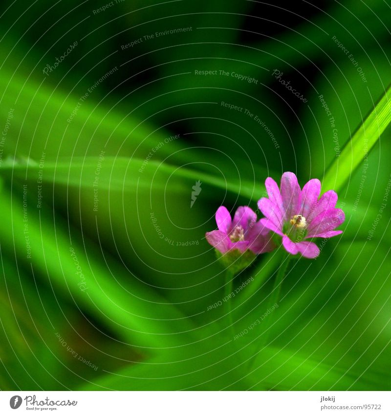 Nature Green Plant Flower Calm Meadow Small Blossom Garden 2 Power Pink Growth Idyll Blossoming Delicate