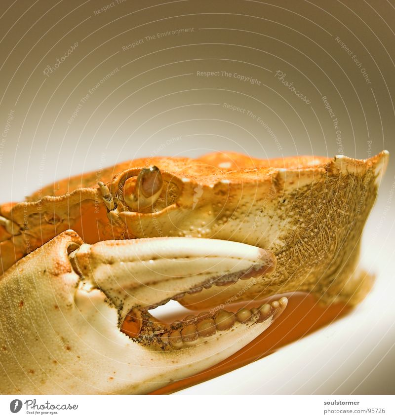 hungry Shrimp Ocean Animal Nutrition Dangerous Evil Lake Living thing Speed Small Panic Fish Fear sea dweller Food Threat Shellfish Eyes Death Armor-plated Bowl