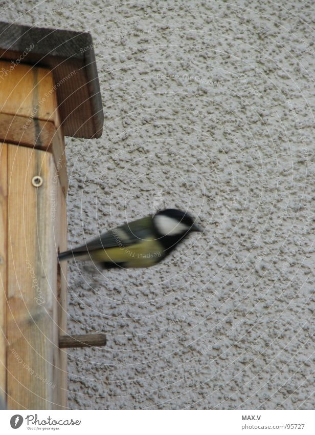 change diapers Tit mouse Bird Birdhouse Wood Departure Wall (building) Snapshot bird box Aviation