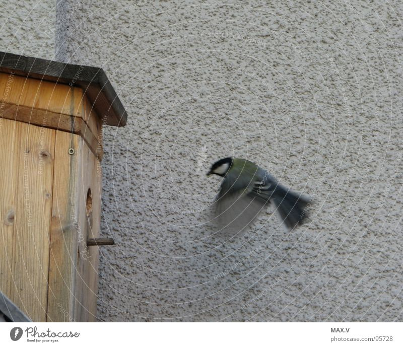 Wall (building) Spring Bird Snapshot Feeding Birdhouse Tit mouse Animal