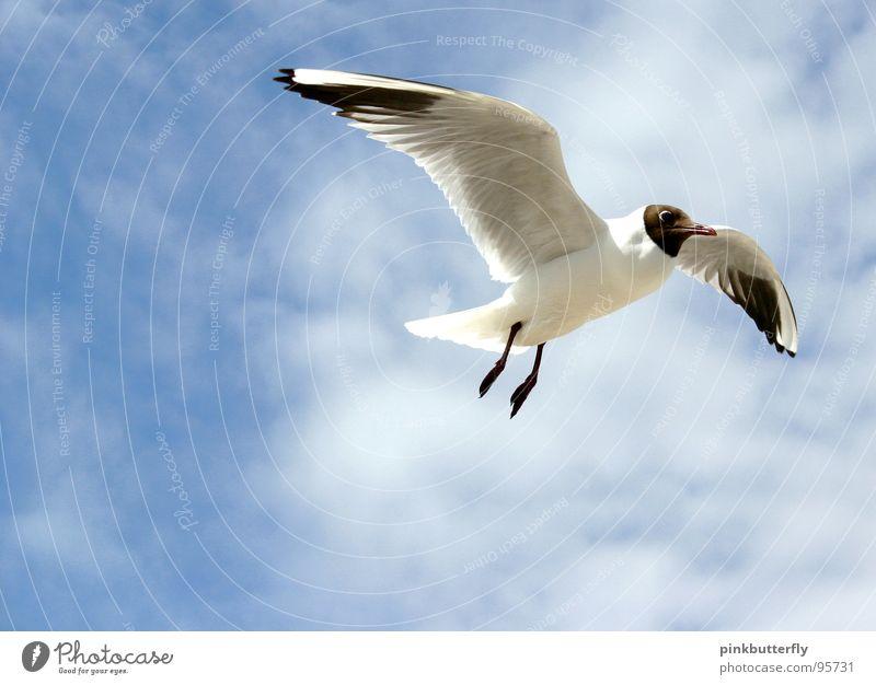 Sky White Ocean Blue Summer Beach Vacation & Travel Clouds Relaxation Freedom Lake Air Legs Brown Bird Coast