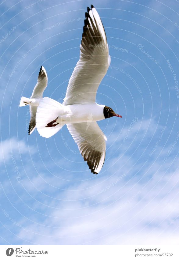 Fly up to the Sky... SECOND Seagull Bird Air Hover Summer Lake Ocean Coast Vacation & Travel White Brown Relaxation Beach Clouds Colour Guide Legs