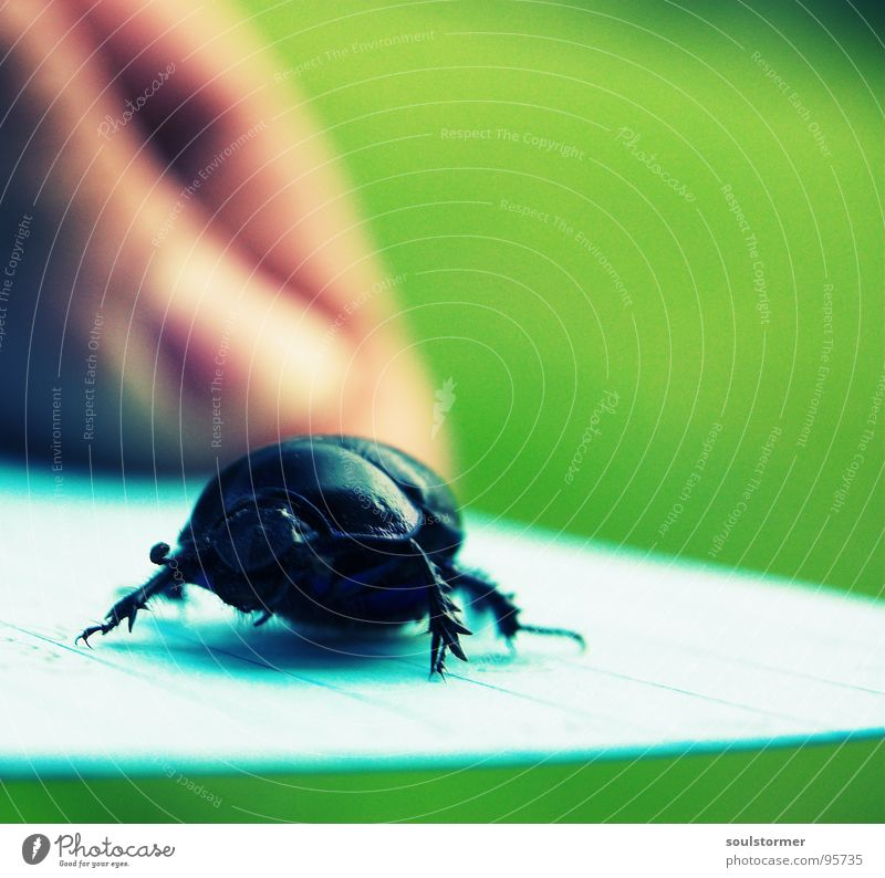 Legs Fear Arm Walking Paper Wing Insect Painting and drawing (object) Square Escape Beetle Panic Wood grain Armor-plated Cross processing