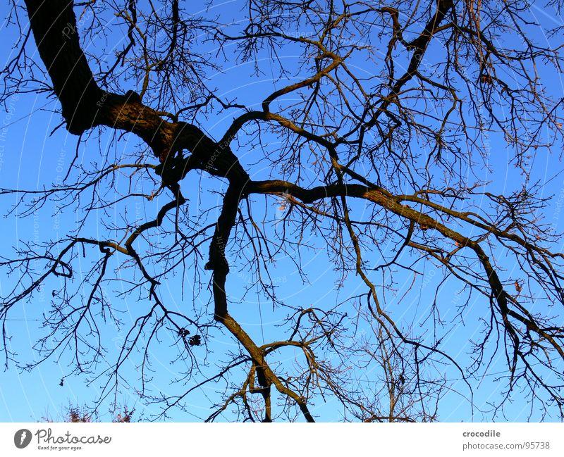nudist tree Tree Autumn Winter Wood Tree bark Growth Maturing time Development Air Oxygen Pure Brown Dark Gloomy Branch Twig Organic farming Sky Blue Spooky