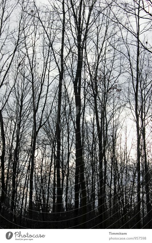 November forest. Environment Nature Plant Sunlight Autumn Beautiful weather Forest Wood Esthetic Dark Simple Natural Gray Black Emotions Branch