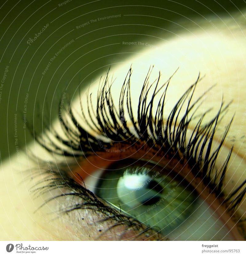 Green Face Eyes Lake Eyelash Macro (Extreme close-up) Pupil Iris
