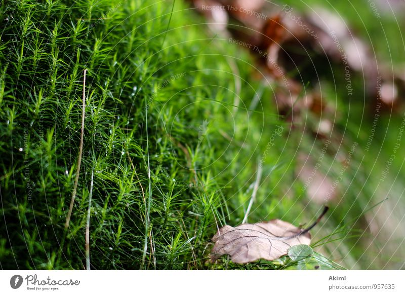 Green Autumn Nature Plant Grass Bushes Moss Foliage plant Forest Unwavering Relaxation Life Calm Damp Leaf Macro (Extreme close-up) Endurance Autumnal