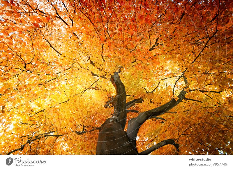 Tree Leaf Autumn Lamp Orange Gold Branch Tree trunk Treetop Autumn leaves Autumnal Burn Pride Red-haired Goodbye