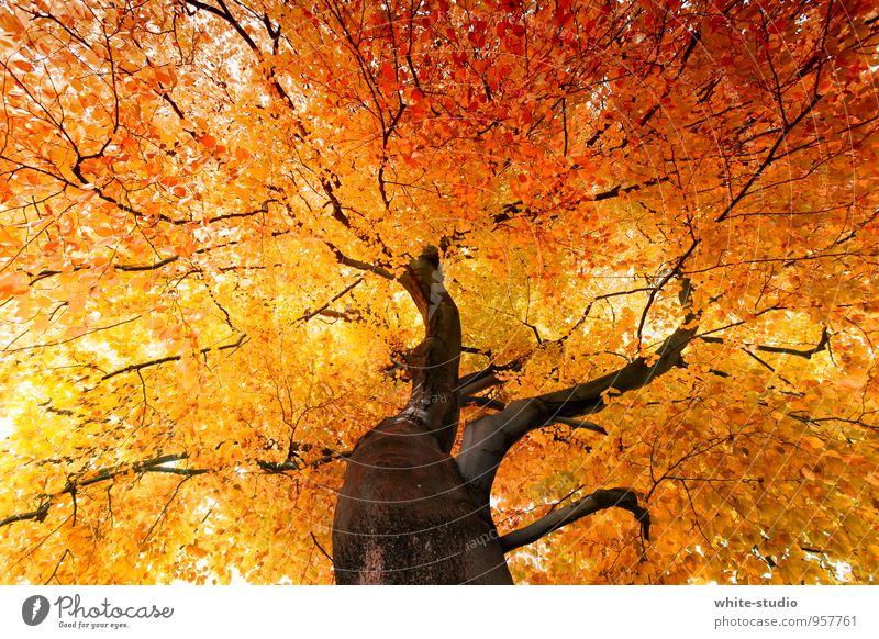 Nature Tree Leaf Environment Autumn Happy Brown Contentment Happiness Joie de vivre (Vitality) Tree trunk Treetop Anticipation Autumn leaves Autumnal Enthusiasm