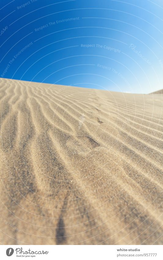 Vacation & Travel Loneliness Landscape Sand Above Fog Wind Animal foot Warm-heartedness Dry Depth of field Tracks Desert Hot Dune Beach dune