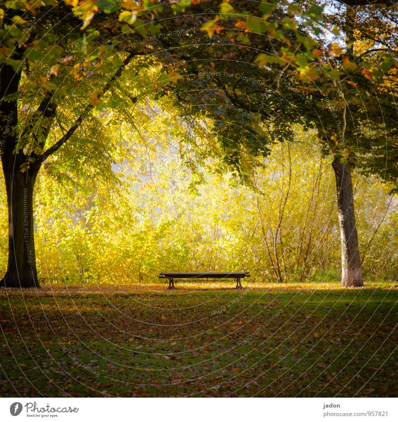 a place in the sun. Relaxation Calm Nature Plant Earth Fire Sun Autumn Tree Grass Bushes Leaf Garden Park Meadow Sit Hot Warmth Yellow Gold Esthetic Serene