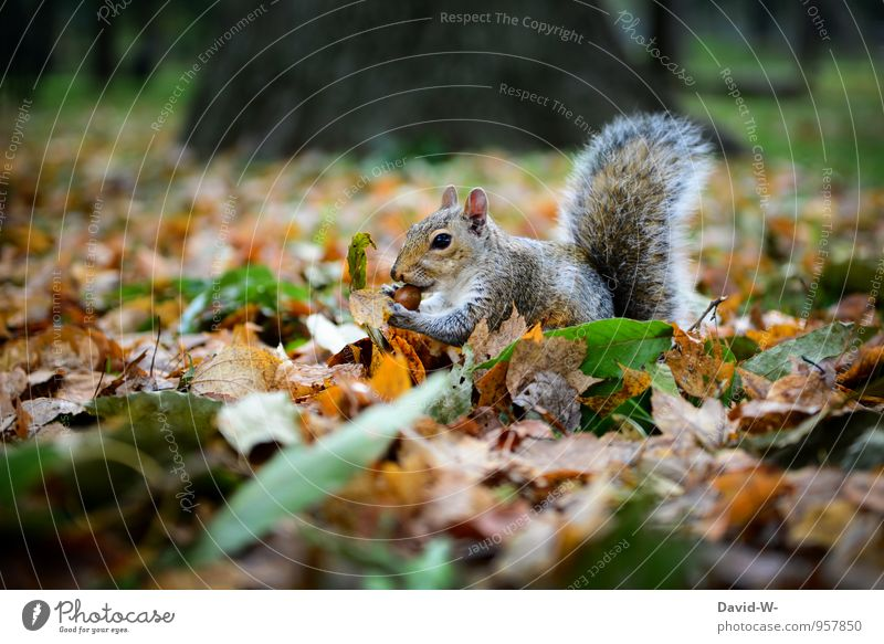 Nature Beautiful Leaf Animal Winter Forest Autumn Happy Eating Brown Park Wild animal To enjoy Curiosity Pelt Appetite