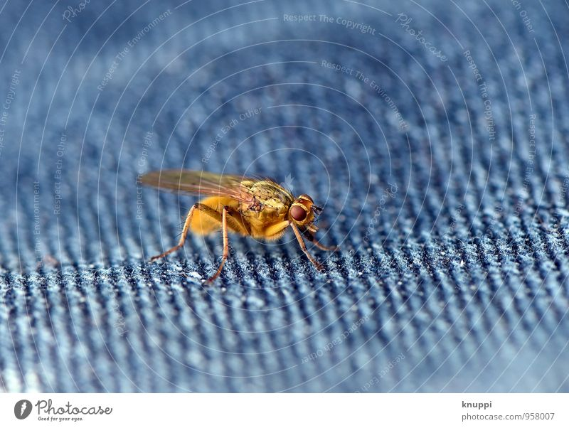 The fly! Nature Sun Sunlight Spring Summer Beautiful weather Warmth Animal Wild animal Fly Animal face Wing 1 Exceptional Threat Authentic Creepy Bright