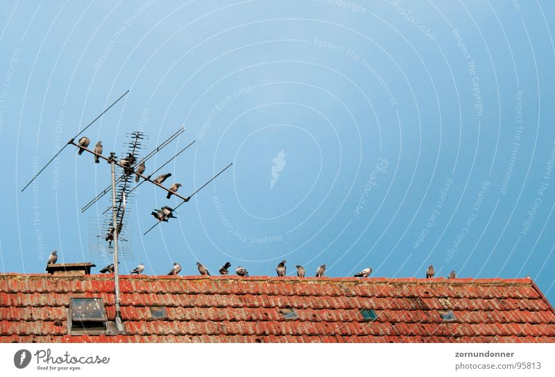 Sky Summer Bird Break Roof Pigeon Antenna Flock