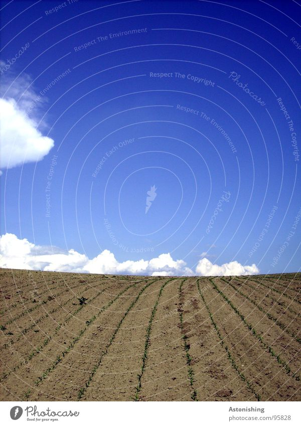 the clouds wander on the horizon Environment Nature Landscape Plant Earth Sky Clouds Horizon Spring Beautiful weather Drought Agricultural crop Field Stand