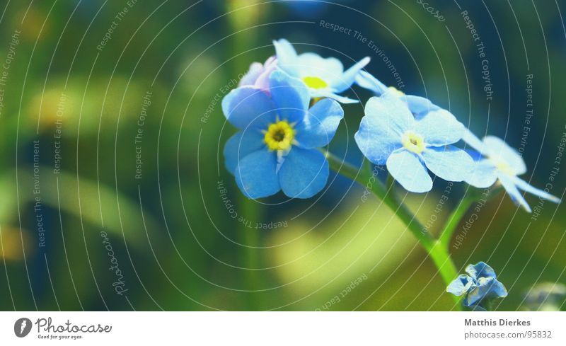 Blue Summer Flower Yellow Colour Emotions Graffiti Bouquet Depth of field Brilliant Forget-me-not Sated