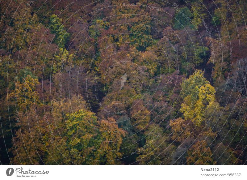I believe I can fly Environment Nature Landscape Plant Air Autumn Beautiful weather Tree Forest Flying Hang Hiking Multicoloured Joie de vivre (Vitality)