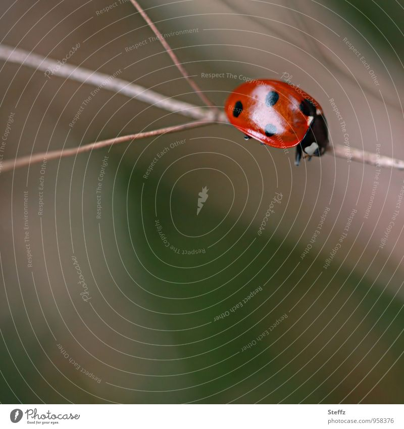 Nature Relaxation Red Lanes & trails Brown Lie Copy Space Break Target Fatigue Meditation Crawl Beetle Stagnating Select Ladybird