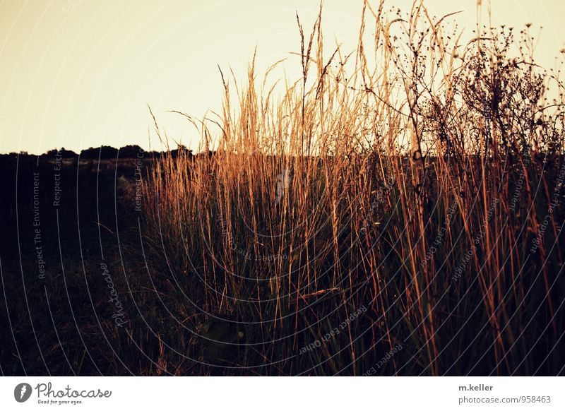 Plant Beautiful Relaxation Landscape Garden Horizon Wild Beginning Soft Idea Adventure Hope Desire Belief Identity
