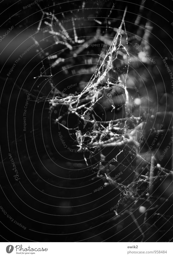weave Environment Thin Authentic Firm Small Near Flexible Spider's web Cobwebby Dark Black & white photo Exterior shot Close-up Detail Macro (Extreme close-up)
