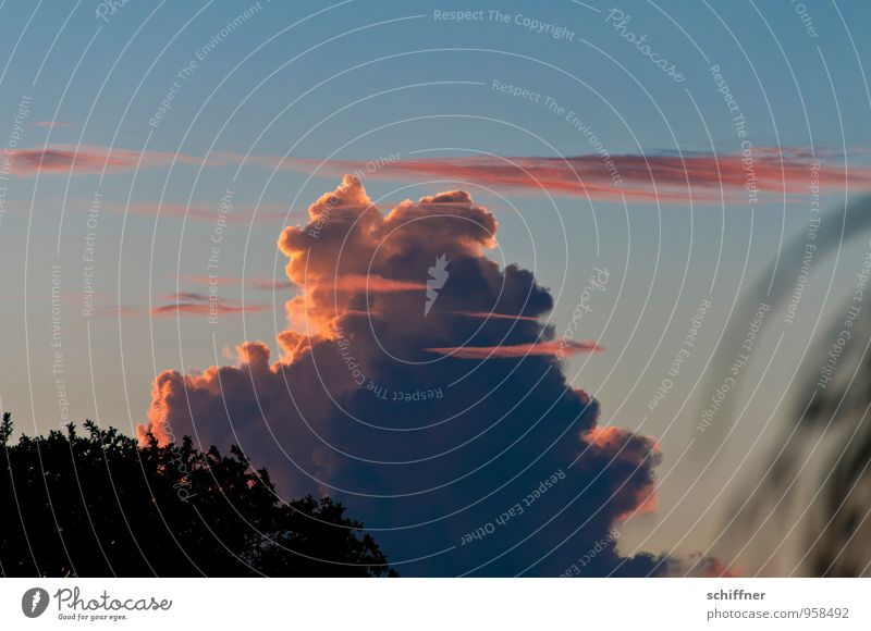 Sky Blue Clouds Environment Exceptional Pink Weather Bushes Climate Beautiful weather Climate change Bad weather Storm clouds Cumulus Cloud formation