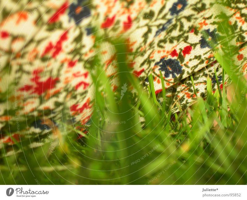 Nature Flower Green Summer Joy Colour Meadow Fresh