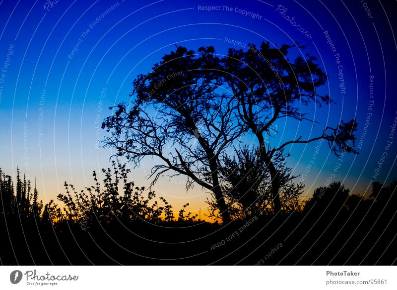 Blue hour Tree Progress Leaf Bushes Sunset Moody Colouring Twilight siluette Branch shrubber Sky