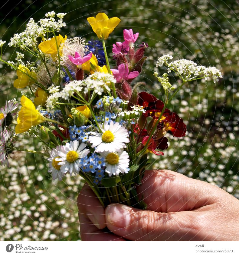 Spring flowers at summer temperatures Beautiful Fragrance Garden Mother's Day Hand Fingers Flower Grass Meadow Bouquet Blossoming To hold on Jump Women`s hand