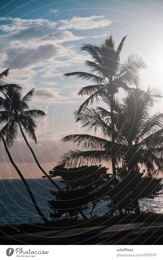Sun worshipper II Environment Nature Plant Foliage plant Exotic Waves Coast Beach Ocean Cliche Palm tree Palm frond Palm beach Palm leaf wallpaper