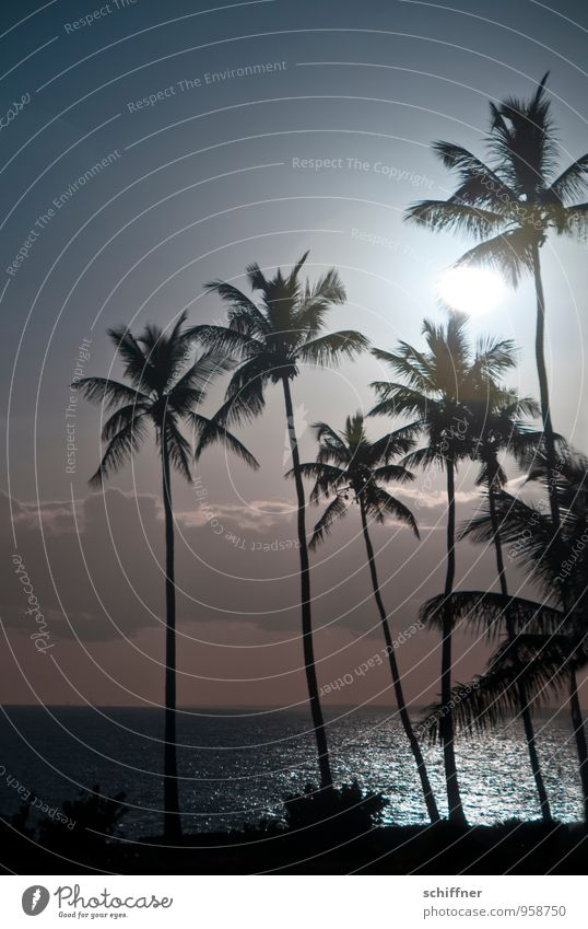 sun worshippers Landscape Sun Sunlight Climate Climate change Weather Beautiful weather Plant Tree Foliage plant Exotic Waves Coast Beach Ocean Palm tree