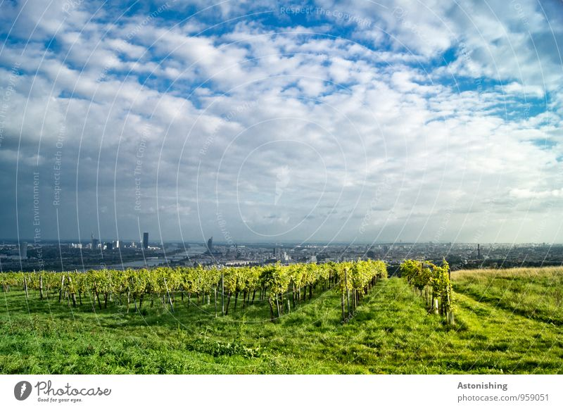View of Vienna Environment Nature Landscape Plant Air Sky Clouds Horizon Autumn Weather Beautiful weather Grass Bushes Agricultural crop Meadow Hill River