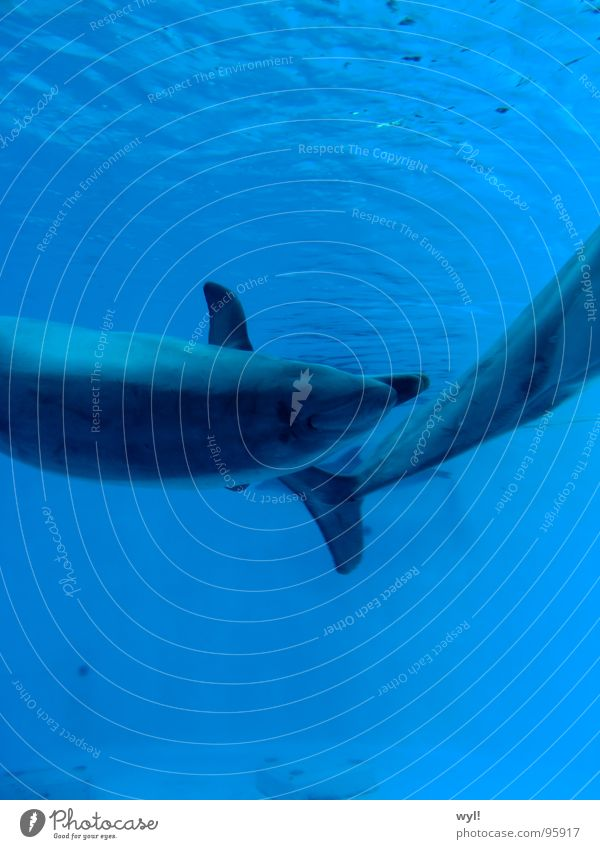 Water Ocean Blue Waves Fish Aquarium Mammal Tails Water wings Snout Basin Salt Dolphin Whale Marine mammal