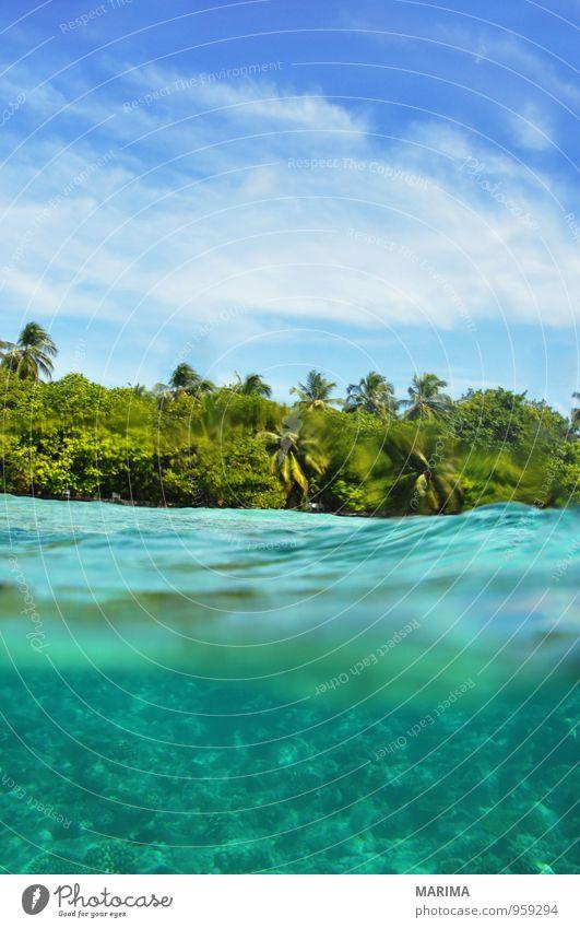 Nature Vacation & Travel Blue Water Ocean Calm Animal Environment Tourism Island Asia Dive Exotic Palm tree Flock Aquarium