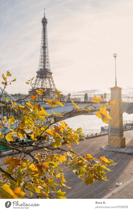 Paris in Autumn II Vacation & Travel Tourism Trip Sightseeing City trip Human being Group Beautiful weather Tree Famousness Joie de vivre (Vitality)