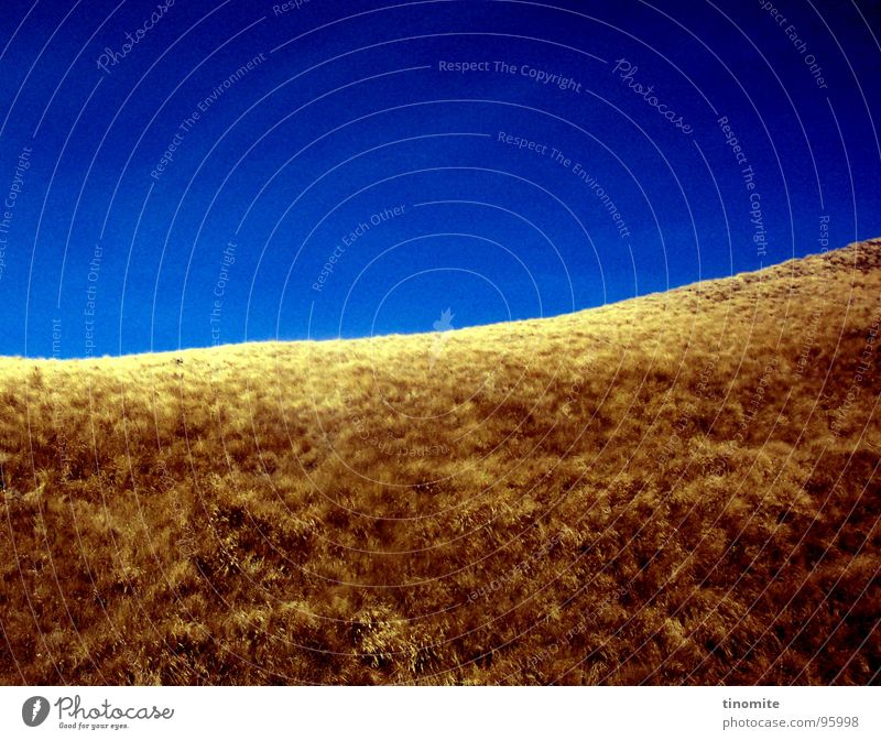 Drought in blue Dry Yellow Brown Grass New Zealand Horizon Bushes Steppe Grassy plains Hill Meadow Australia Desert Shriveled Blue Sky Beautiful weather Thin