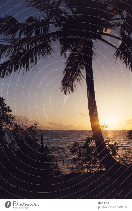Sun Ocean Palm tree Maldives