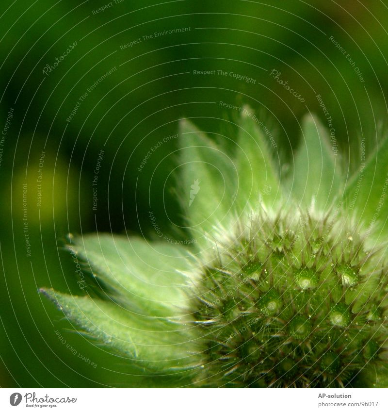 Nature Green Beautiful Plant Summer Flower Meadow Grass Spring Garden Blossom Growth Star (Symbol) Beautiful weather Blossoming Delicate