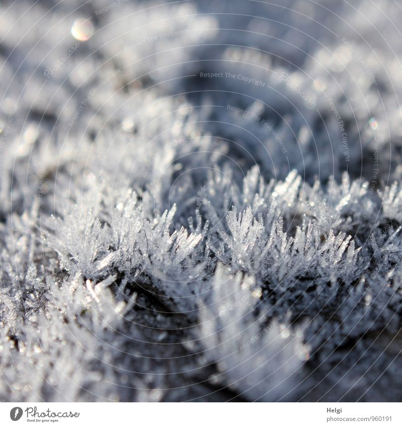 Natural artwork... Environment Nature Winter Ice Frost Freeze Glittering Esthetic Authentic Exceptional Beautiful Uniqueness Cold Small Point Gray White Bizarre