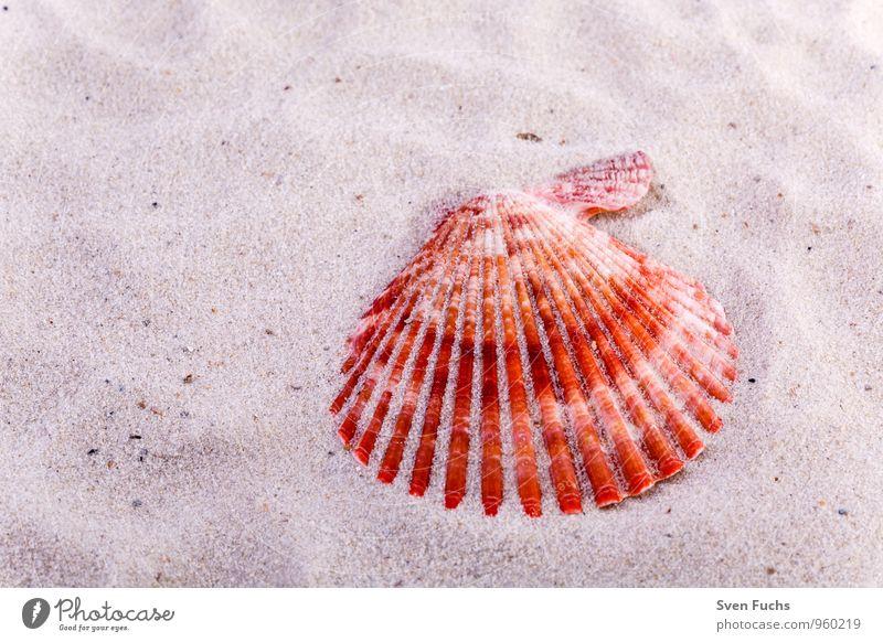 Nature Ocean Beach Sand Symbols and metaphors Wellness Mussel Maritime
