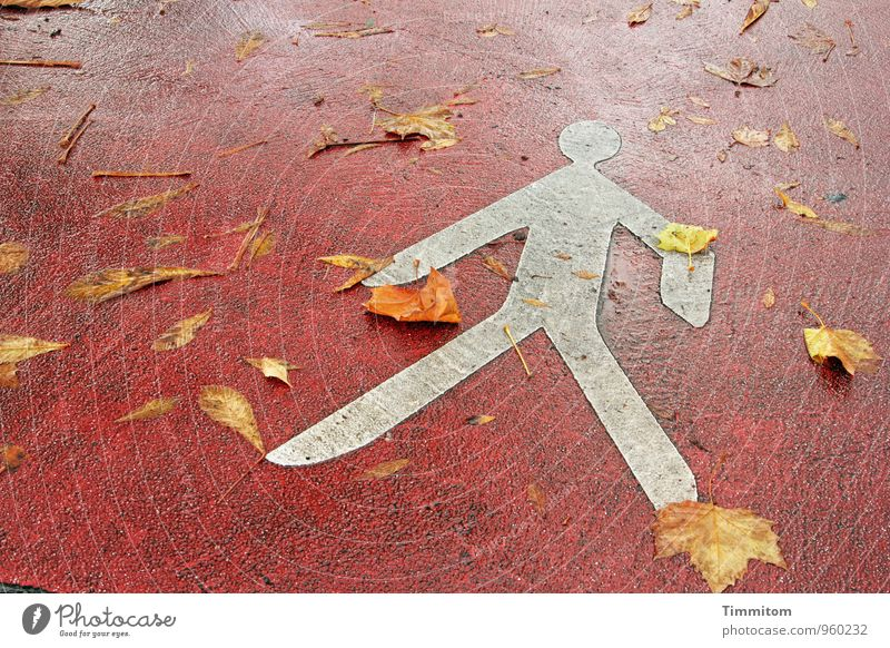 Live with leaves. Autumn Leaf Street Signs and labeling Lie Yellow Red White Emotions Warning label Pedestrian Colour photo Exterior shot Deserted