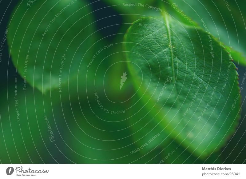 GREEN-COLOURED Tree Prongs Plant Green Vessel Background picture Summer Virgin forest Primitive times Air Breathe Wood Flower Dark 2 Profound Corner Hover Earth