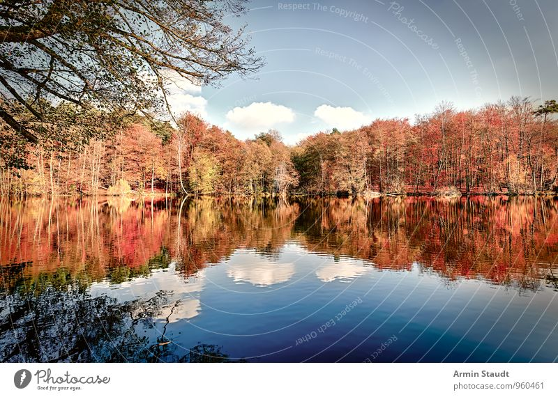 Autumn forest - lake - Glatt Relaxation Calm Leisure and hobbies Vacation & Travel Nature Landscape Water Sky Beautiful weather Forest Lakeside Illuminate
